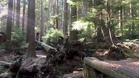 Salvation Skinny Log Gap Jump