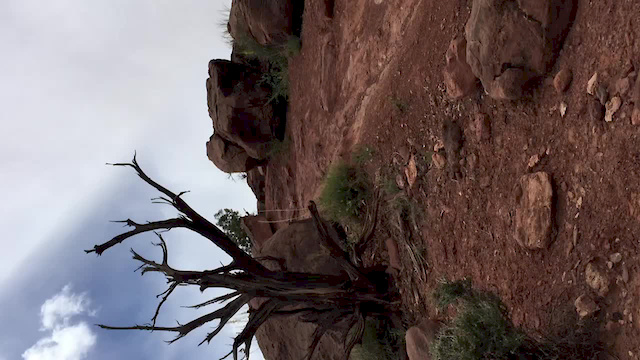 Must Watch Video