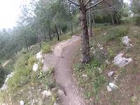 A Fast Run Down Foxie