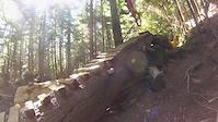 Cypress DH