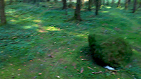 Prestegårdsskogen- Steinen